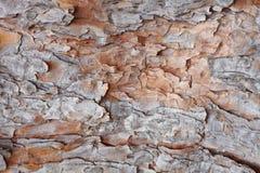 Textura del pino-árbol Fotografía de archivo libre de regalías