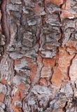Textura del pino Imágenes de archivo libres de regalías