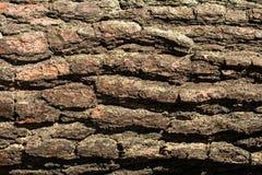 Textura del pino Foto de archivo