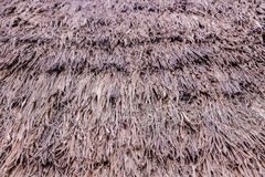 Textura del pino Imagen de archivo libre de regalías