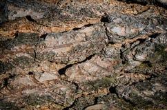 Textura del pino Imagenes de archivo
