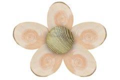 Textura del pino siberiano cortado del árbol con los anillos anuales y del árbol de haya en forma de la flor aislado en el fondo  Imagen de archivo libre de regalías