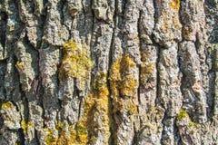 Textura del pino y del musgo Foto de archivo libre de regalías