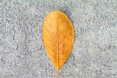 Textura del piso del cemento del fondo fotografía de archivo