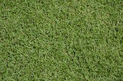 Textura del piso del césped de la hierba verde Foto de archivo libre de regalías