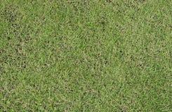 Textura del piso del césped de la hierba verde Fotografía de archivo libre de regalías