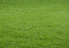 Textura del piso del césped de la hierba verde Imágenes de archivo libres de regalías