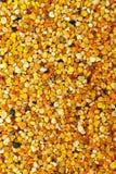 Textura del polen de la abeja Imagen de archivo