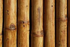 Textura del primer de bambú de los árboles Fotos de archivo libres de regalías