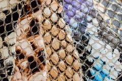 Textura del primer de cuero exótico auténtico, grabada en relieve debajo de la piel un reptil, Fotos de archivo