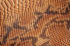 Textura del primer del cuero auténtico, con los reptiles grabados en relieve de las escalas, fondo de la tendencia Fotos de archivo libres de regalías
