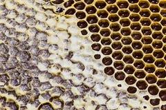 Textura del primer del panal con la miel Fotografía de archivo libre de regalías