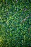 Textura del primer verde del pantano imágenes de archivo libres de regalías
