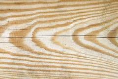 Textura del árbol de pino Imagen de archivo