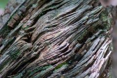 Textura del registro del árbol fotografía de archivo