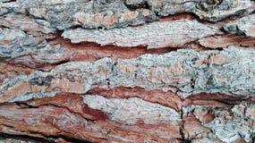 Textura del registro del árbol de pino Foto de archivo libre de regalías