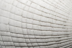 Textura del Seashell foto de archivo libre de regalías