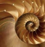 Textura del shell. Fotos de archivo