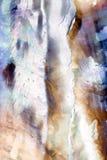 Textura del shell del olmo tirada con la lente macra Fotos de archivo