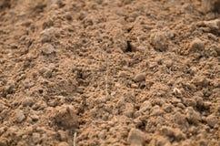 Textura del suelo fértil Foto de archivo libre de regalías