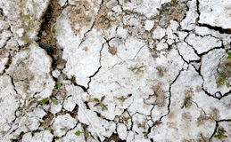 Textura del suelo y fango seco Imagen de archivo