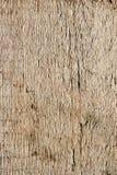 Textura del tablón del roble Fotografía de archivo