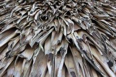 Textura del tejado de la paja Imagen de archivo libre de regalías