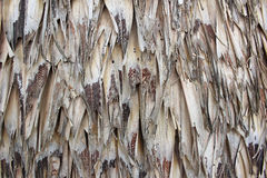 Textura del tejado de la paja Fotos de archivo libres de regalías