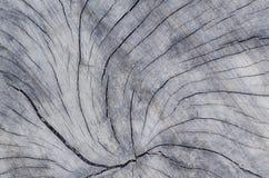 Textura del tocón Fotos de archivo