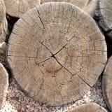 Textura del tocón de árbol Imagen de archivo libre de regalías