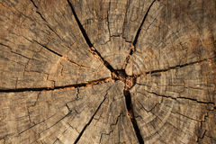 Textura del tocón de árbol Imágenes de archivo libres de regalías