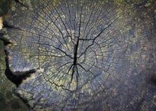 Textura del tocón de árbol viejo Fotos de archivo