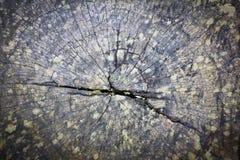Textura del tocón de árbol viejo Fotografía de archivo