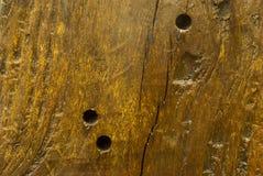 Textura del tocón viejo Fotografía de archivo libre de regalías