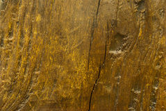 Textura del tocón viejo Fotos de archivo