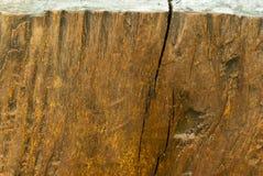 Textura del tocón viejo Imagenes de archivo