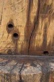 Textura del tocón viejo Foto de archivo
