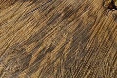 Textura del tronco de árbol Fotos de archivo