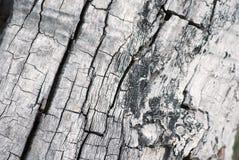 Textura del tronco de árbol imagen de archivo