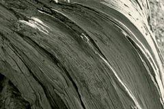 Textura del tronco de madera decaído fotos de archivo