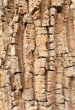 Textura del tronco del pino Fotografía de archivo libre de regalías