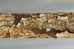 Textura del tubo oxidado viejo oxidado del metal Imagen de archivo libre de regalías