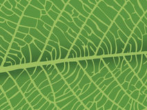 Textura del vector de la hoja Foto de archivo libre de regalías