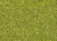 Textura del verde de la aguja del abeto Imagen de archivo