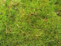 Textura del verde de Moho Foto de archivo libre de regalías