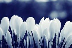 Textura delicada das flores Foto de Stock