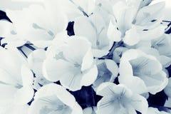 Textura delicada das flores das pétalas Foto de Stock Royalty Free