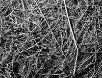 Textura descolorada seca de la hierba en blanco y negro Imágenes de archivo libres de regalías