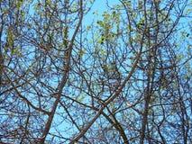 Textura desnuda de los árboles Foto de archivo libre de regalías