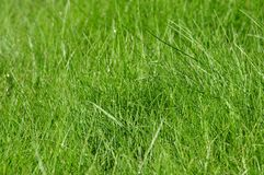 Textura detalhada da grama Foto de Stock
